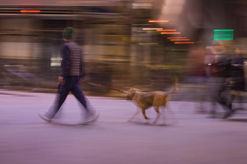 Florence in Motion II Bloodhound