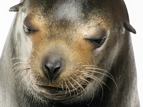 Judy's Mexican Seal